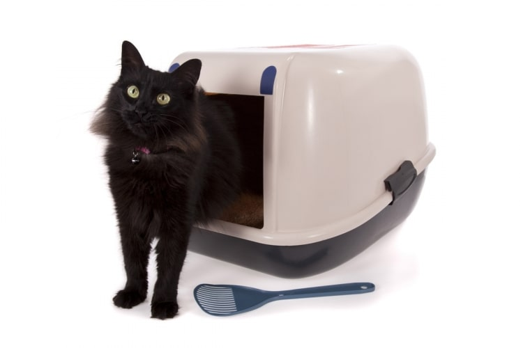 featured image:best cat litter box for odor control